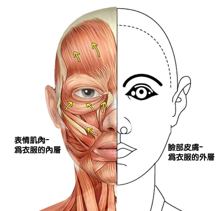 表情肌肉皮圖