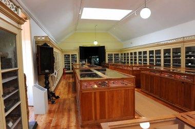 web-r-Museu-Geológico-Lisboa-Leopardo-FTR_3028