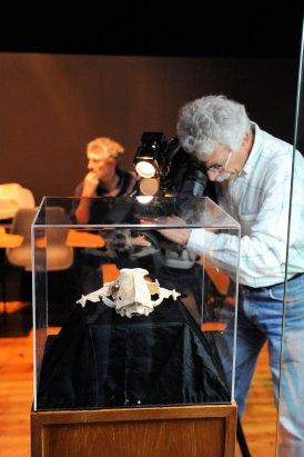 web-r-Museu-Geológico-Lisboa-Leopardo-FTR_3034