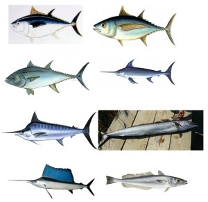 Especies bajo regulación especial según RD 347 2011