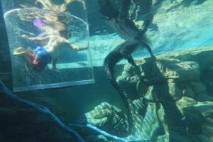 Dive with Crocs