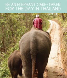 Be an Elephant Caretaker for the Day