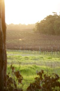 Winery of Margaret River