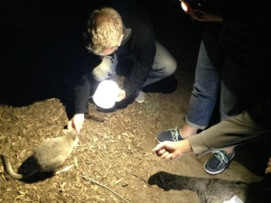 Feeding the nocturnal animals at the Moonlight Sanctuary