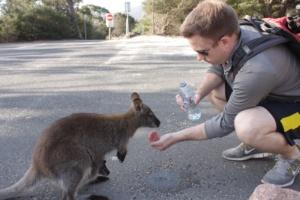 Feed the Kangaroos