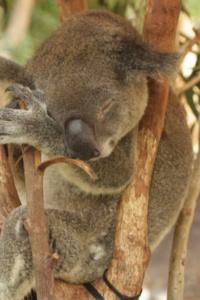 Only Aussie animals are found at the Healesville Sanctuary in Victoria