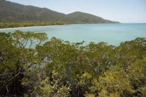 Cape Tribulation- where the rainforest meets the reef