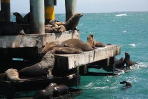 Swim With Fur Seals