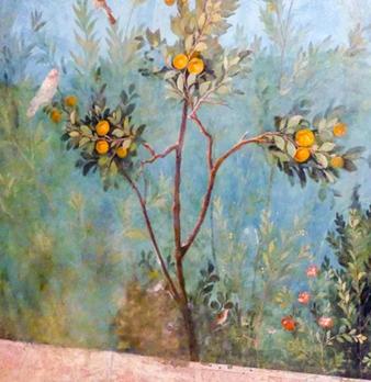 quince tree roman