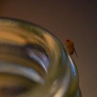 Comment attraper des mouches avec du vinaigre