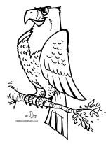 desenho colorir aguia gaviao ave