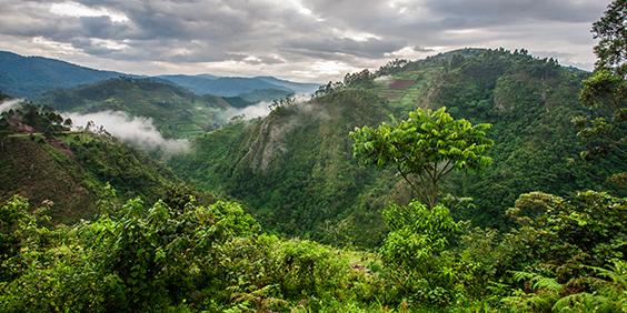 Congo-Jungle_shutterstock_446347579_564x282