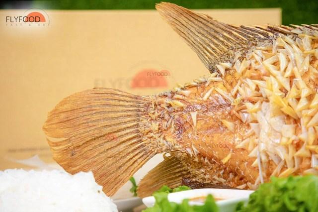 Cá tai tượng bông xù- sự độc đáo riêng biệt của Flyfood - Ảnh 2.