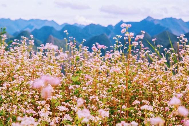 5 điểm đến mùa thu sẽ khiến bạn ngất ngây vì phong cảnh đẹp như trong mơ - Ảnh 16.