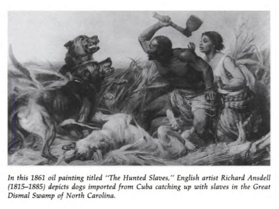 negro dogs