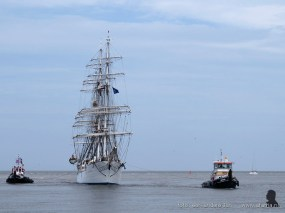 tallship race harlingen 008