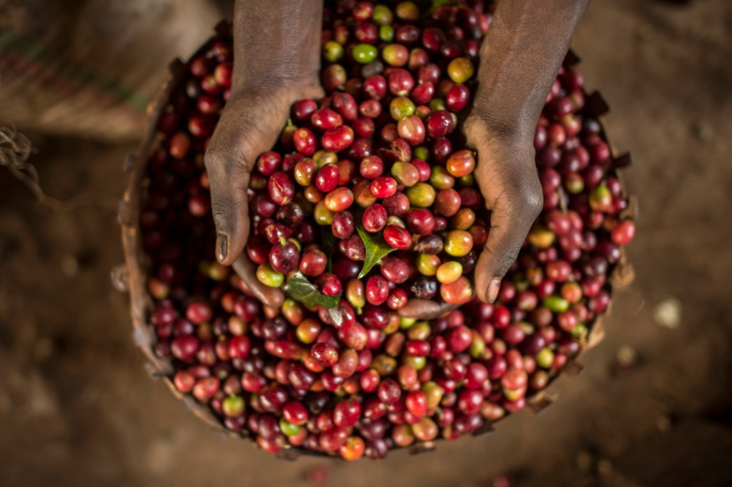 coffee is made in ethiopia