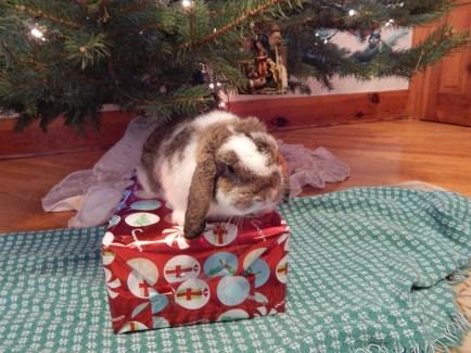 -Allison(Christmas tree and bunnies) 065 (1280x960)