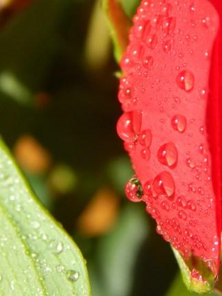 Ahh... I love water-drops!
