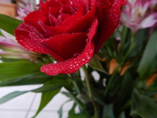 -Allison(rose photoshoot) 043 (1280x960)