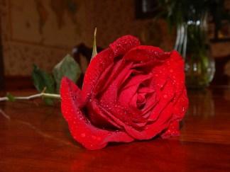 -Allison(rose photoshoot) 054 (1280x960)