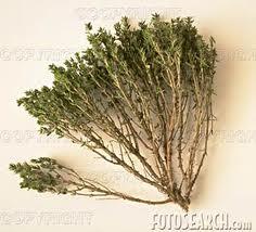 grey الزعتر سيد الأعشاب الطبية فلاحة   zaartar1 الزعتر سيد الأعشاب الطبية فلاحة