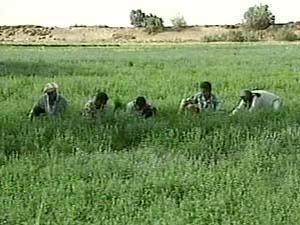 """381986 المغرب يطلق """"المخطط الأخضر"""" لتطوير الإنتاج الزراعي والغذائي المزيد"""