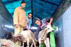 adha_762957199 نصائح صحية لطرق طبخ وتخزين لحوم الأضحية في العيد منتدى أنوال