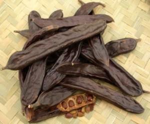 caroblocustbean-300x249 تكيضا : ماذا تعرف عن شجرة الخروب و ثمارها ؟  فلاحة