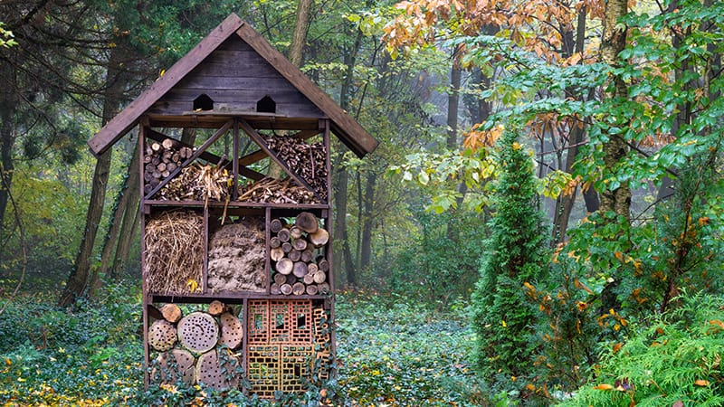 It's a bug's life! Build the perfect hibernation habitat this Autumn