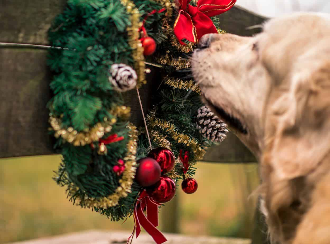 5 Pet-Friendly Christmas Decoration Tips