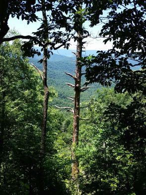 Trail View from Jones Run Fall