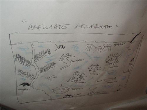affiliate-aquarium