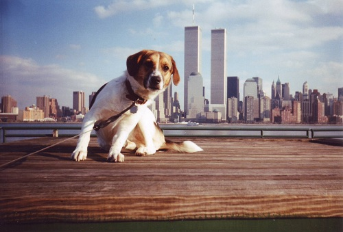 Mickey in front of the World Trade Center