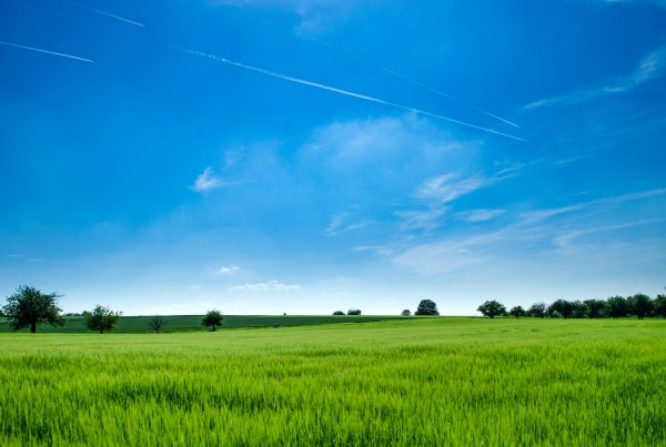 grassy field location