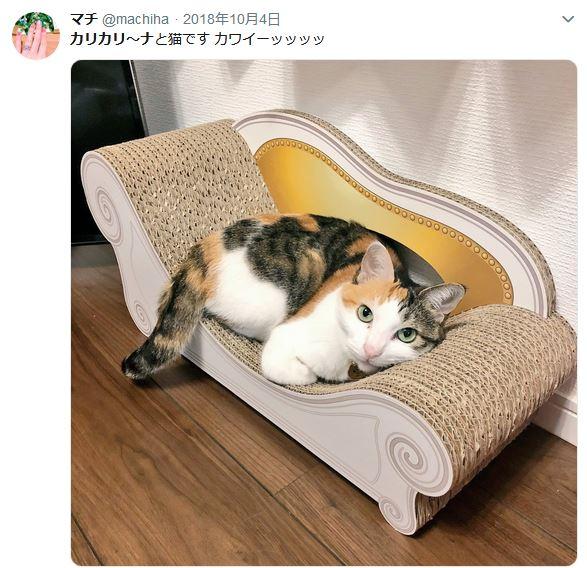 猫の爪とぎ・カリカリ―ナがかわいい