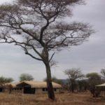 ThornTree camp - Accomodations