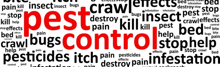 Best Winter Pest Control & Wildlife Removal Tips