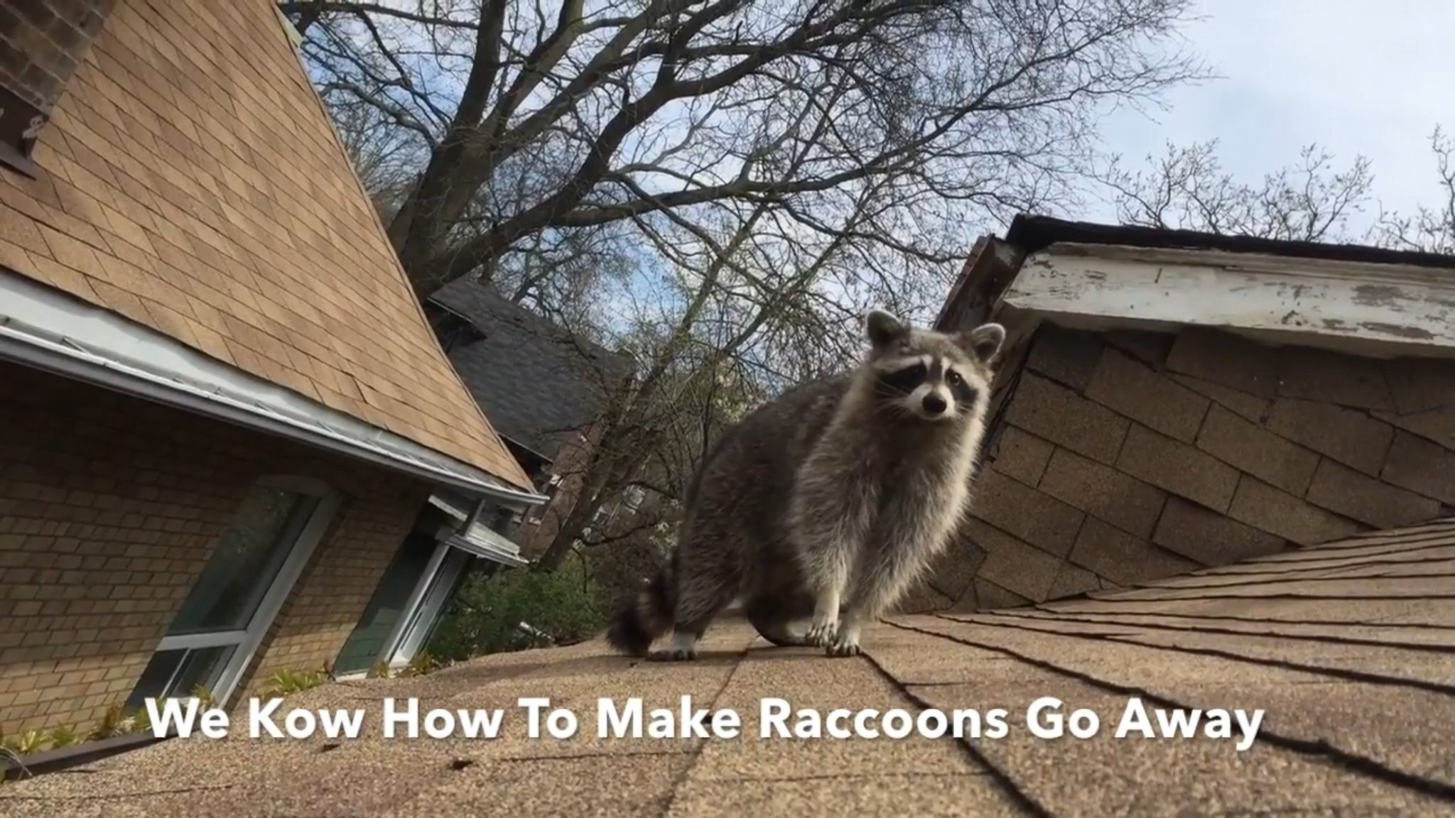 Best Raccoon Removal, Best Squirrel, Top Rated & Best Wildlife Removal Service in Toronto