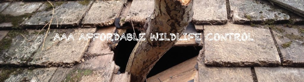 Best Wildlife Removal Companies Tips. Wildlife Removal Toronto Reviews