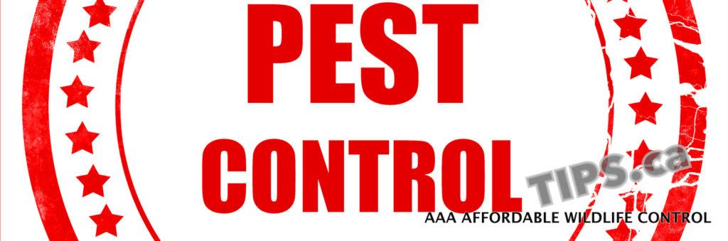 Pest Control, PEST CONTROL Toronto