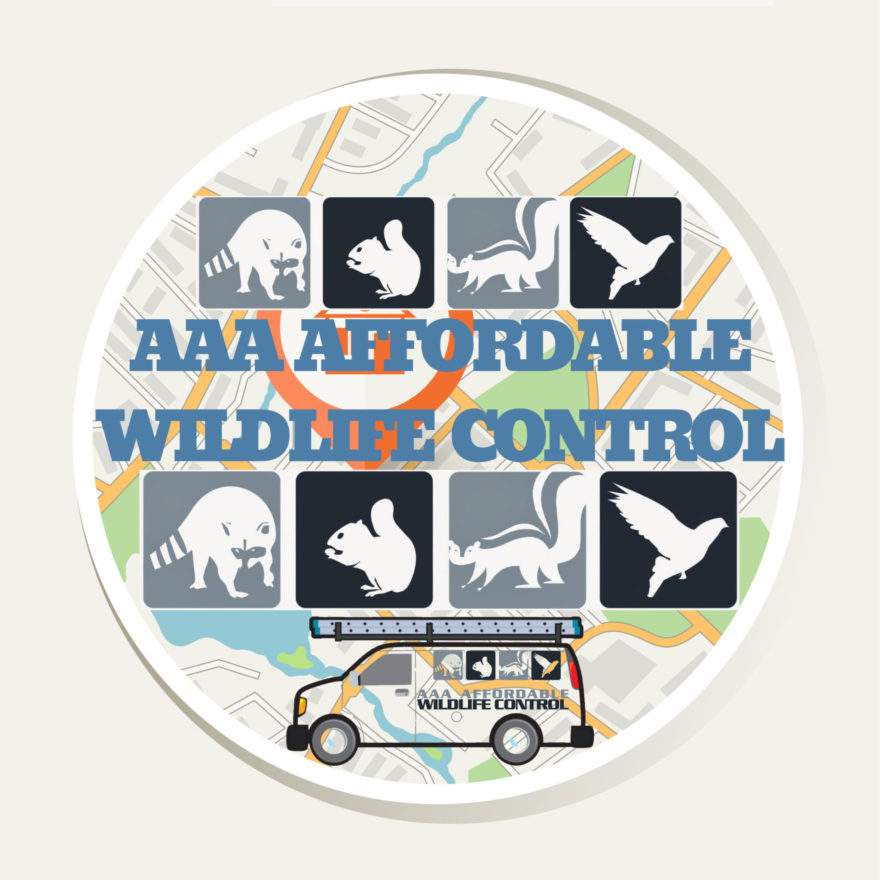 Wildlife Control, Wildlife Removal - AAA Affordable Wildlife Control - Squirrel Removal, Raccoon Removal