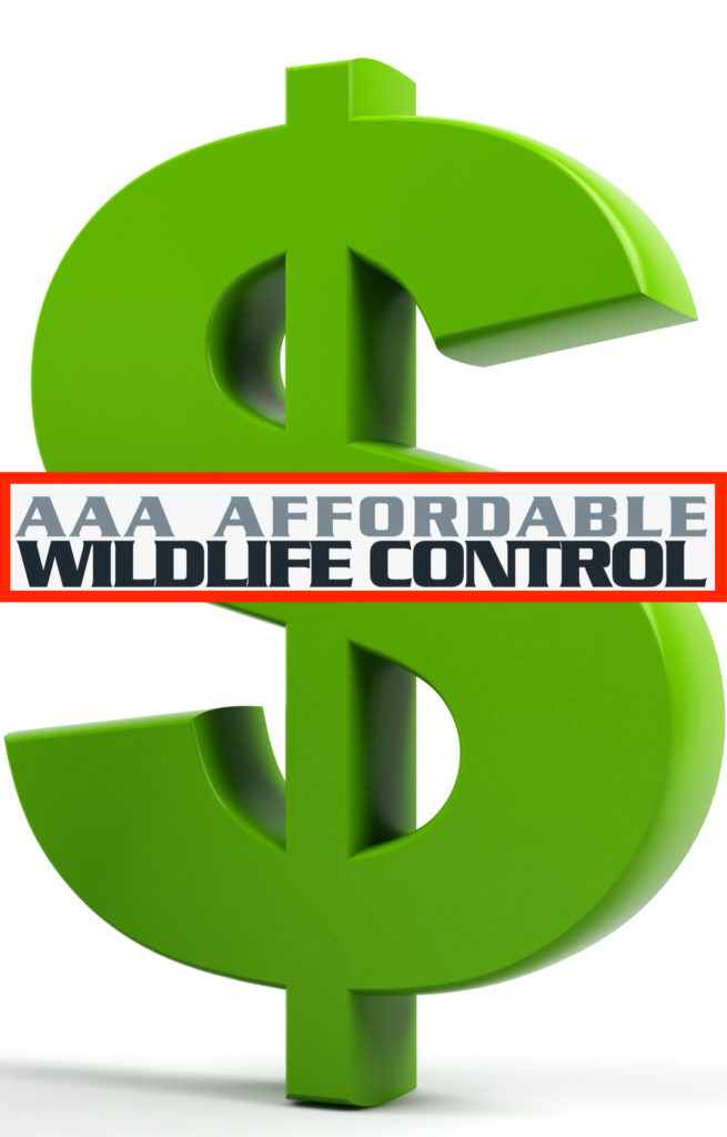 Wildlife Control, Wildlife Control Toronto, Wildlife Removal, Wildlife Removal Toronto, AAA Affordable Wildlife Control, Animal Removal Toronto, Best Wildlife Removal Companies