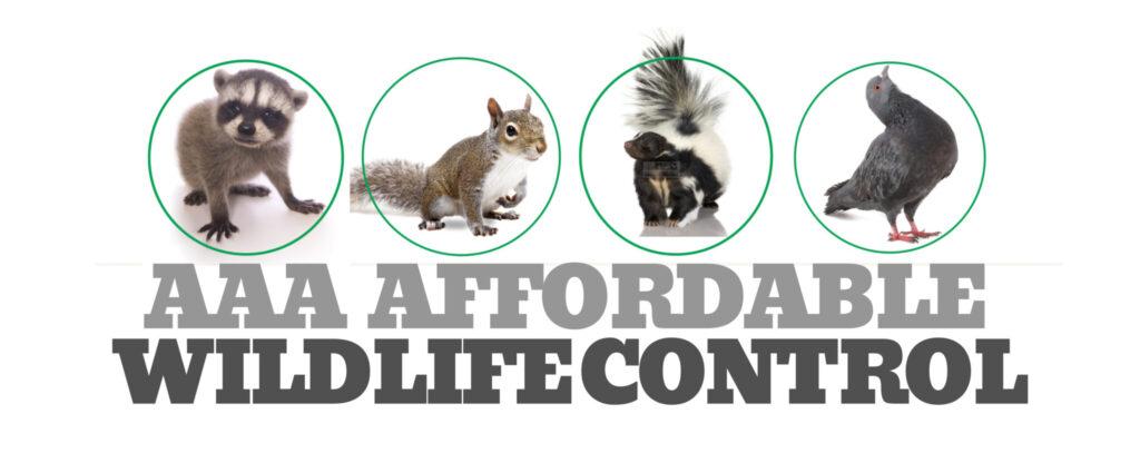 Wildlife Removal, Wildlife Control, Wildlife Control