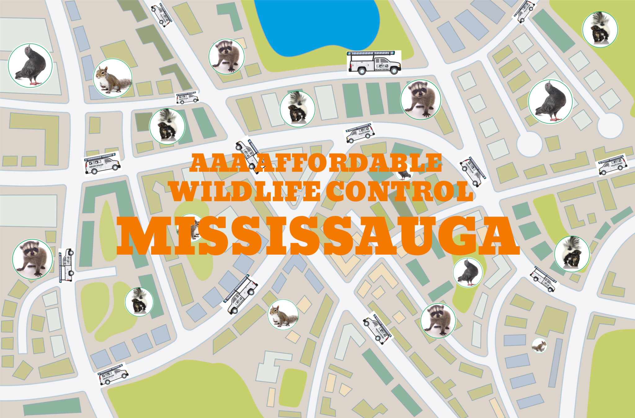 Wildlife Removal in Mississauga, Squirrel Removal Mississauga, Raccoon Removal Mississauga