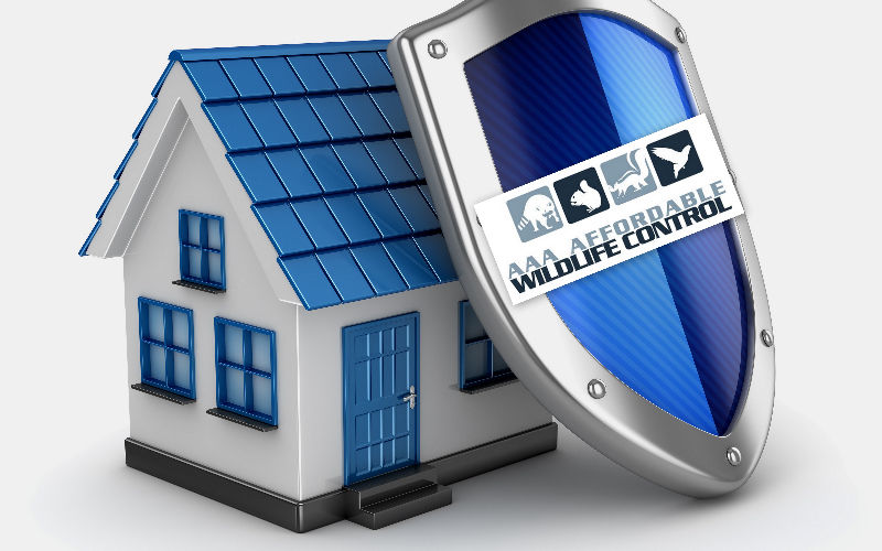 Affordable Wildlife Protection For Your Home