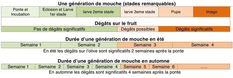 799px-Tableau_mouche_rec_precoce