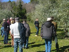 seance_demonstration_taille_olivier_helene_lasserre_france_olive-