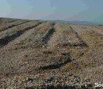 Préparation du sol - ameublement avant plantation