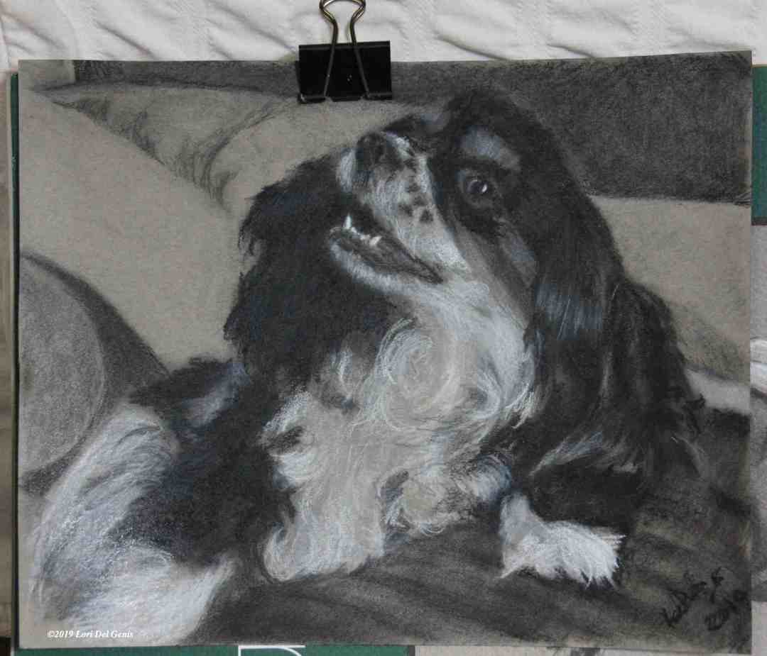 Wishbone is charcoal holiday pet commission of an adorable black and white spaniel by Lori Del Genis